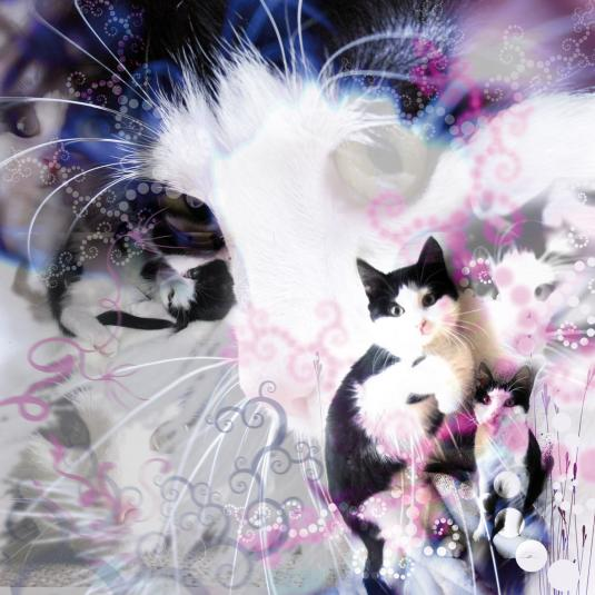 Digiart Poes 2009